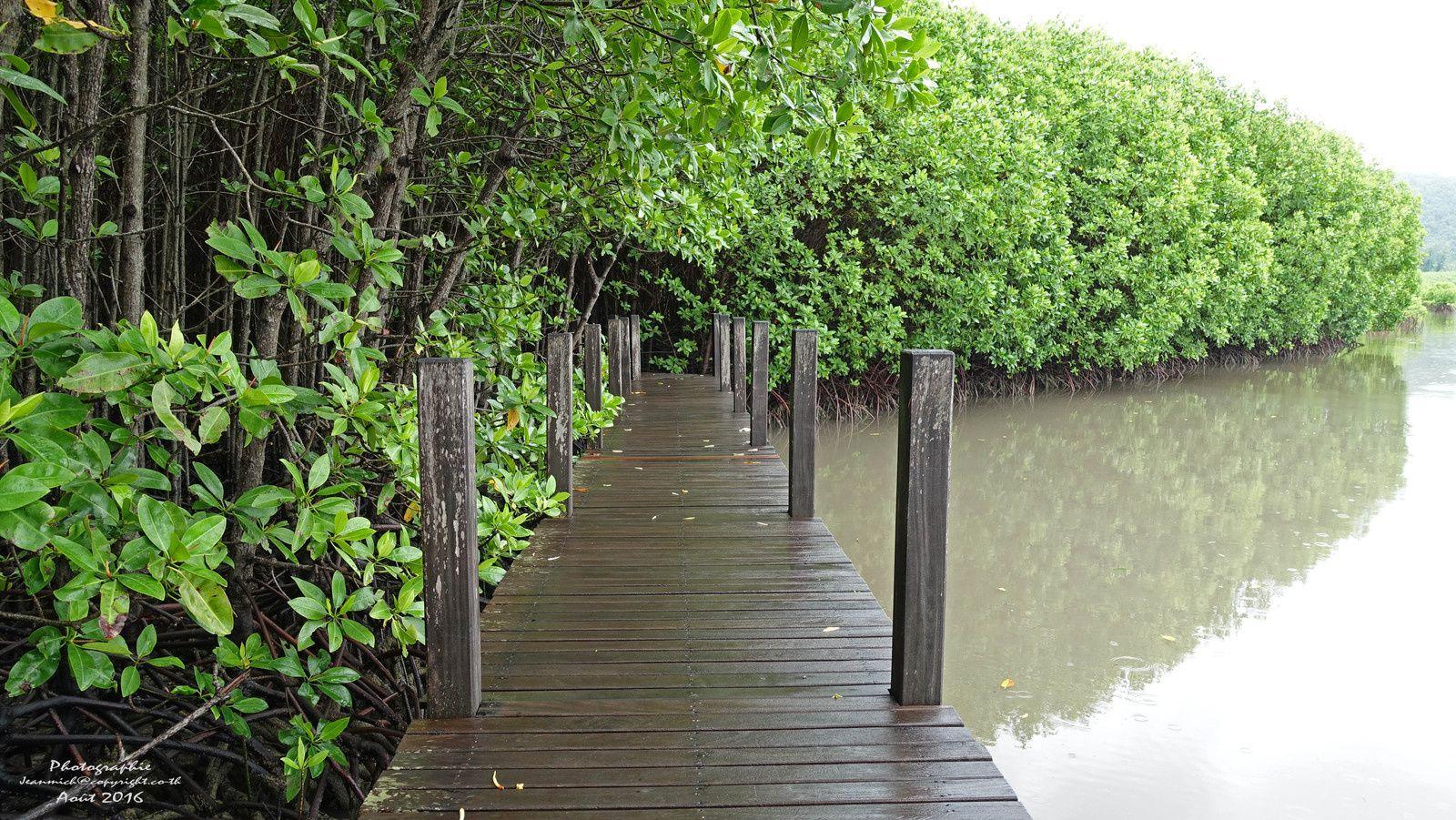 Mangrove de Chantaburi vidéo et dernières photos (Thaïland)