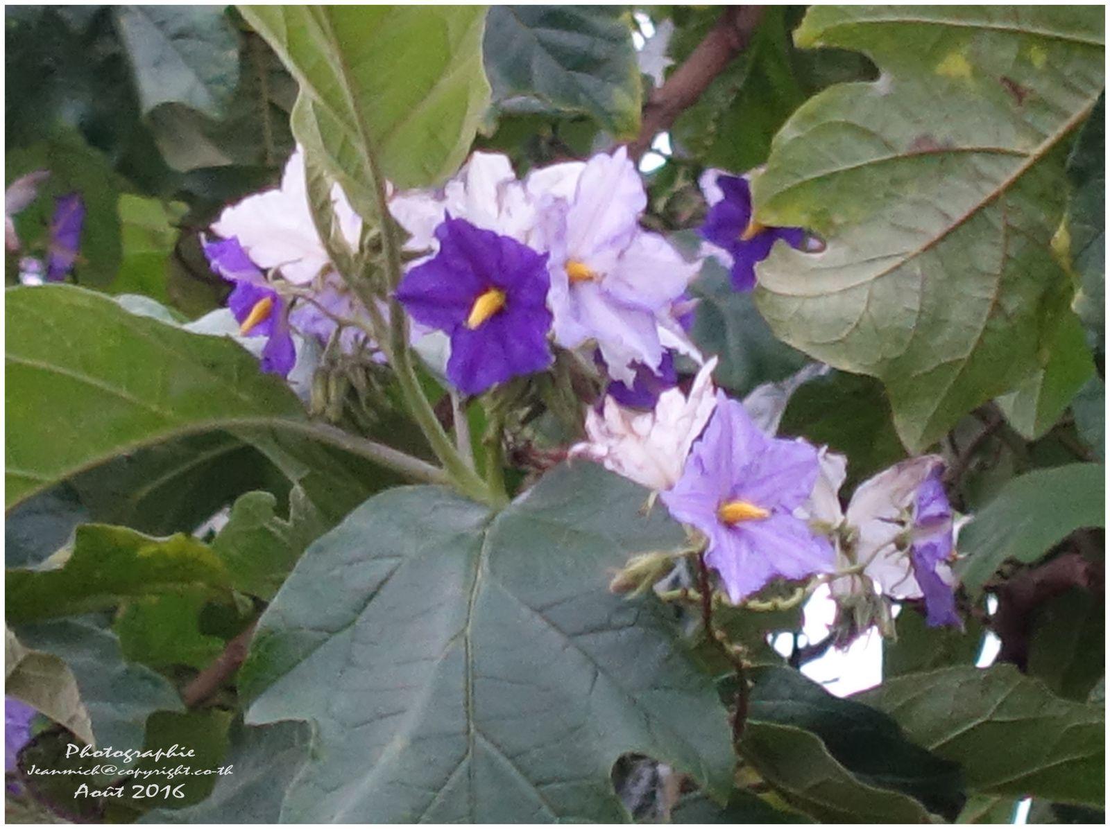 un arbre avec des fleurs bi-colores....