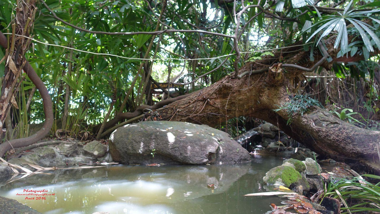 Forest restaurant suite et fin (province de Rayong)