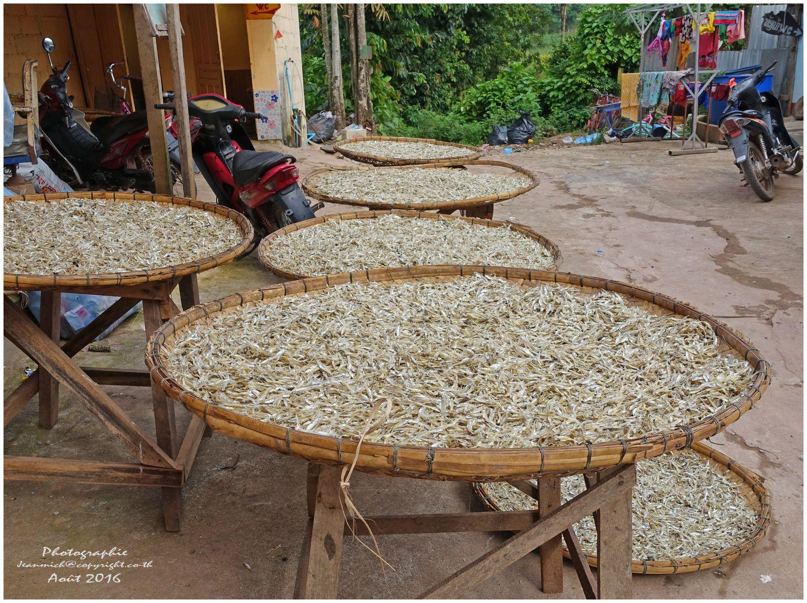 Un marché de poissons au bord de la route (Laos)