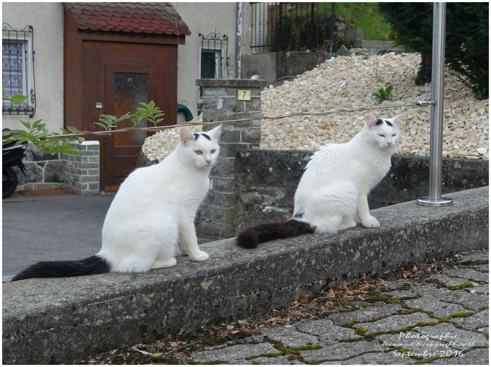 Les jumeaux du voisin....