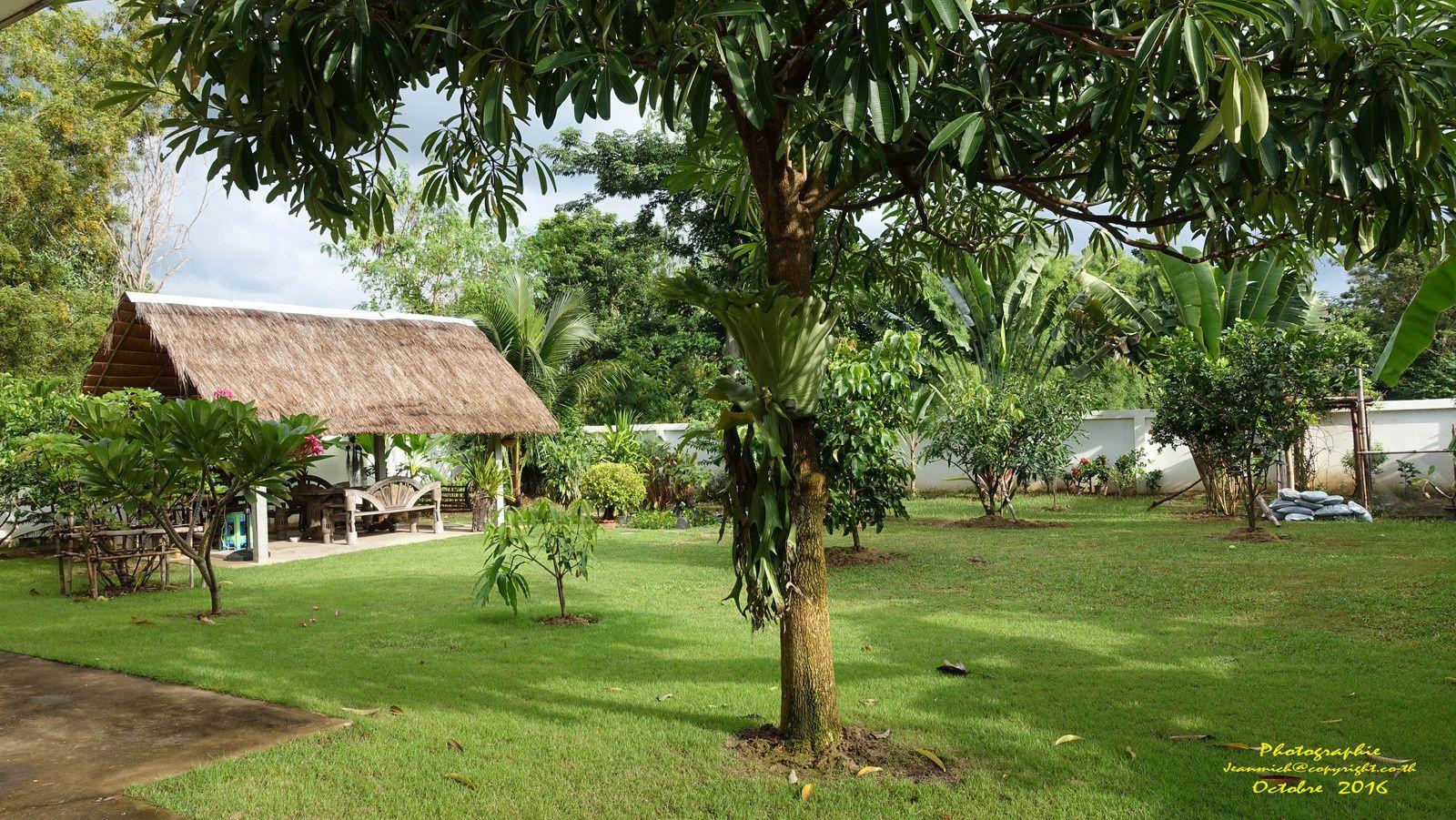 Autour de la maison en octobre (Ubonrat, Khon Kaen, Isaan)
