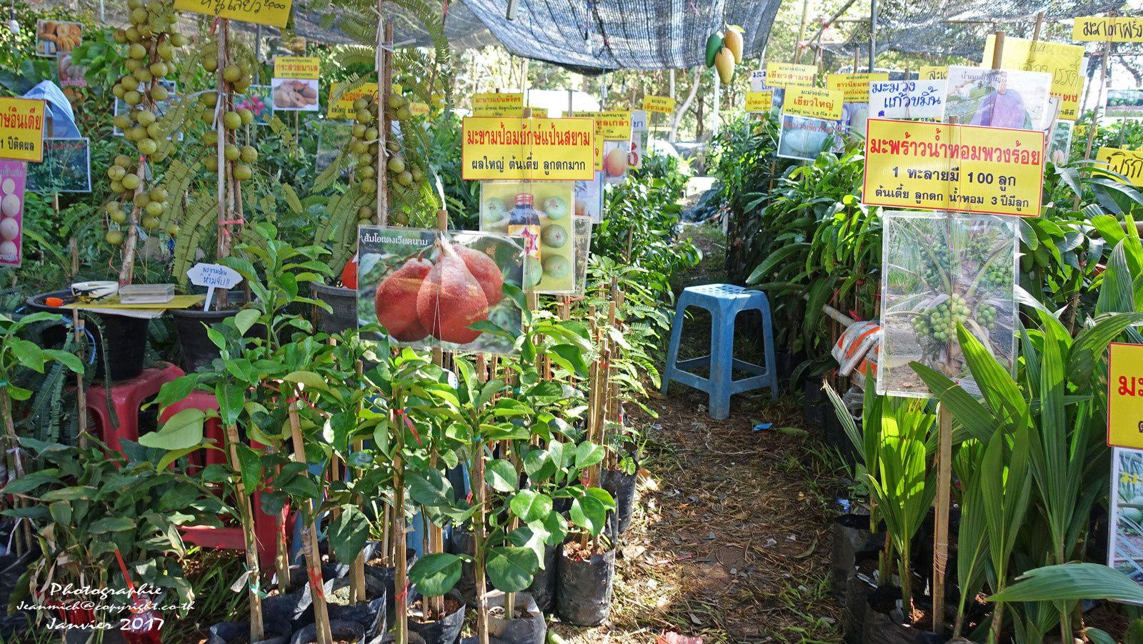 Foire agricole de Khon Kaen (Thaïlande) les essences Durian et Sapodilla.