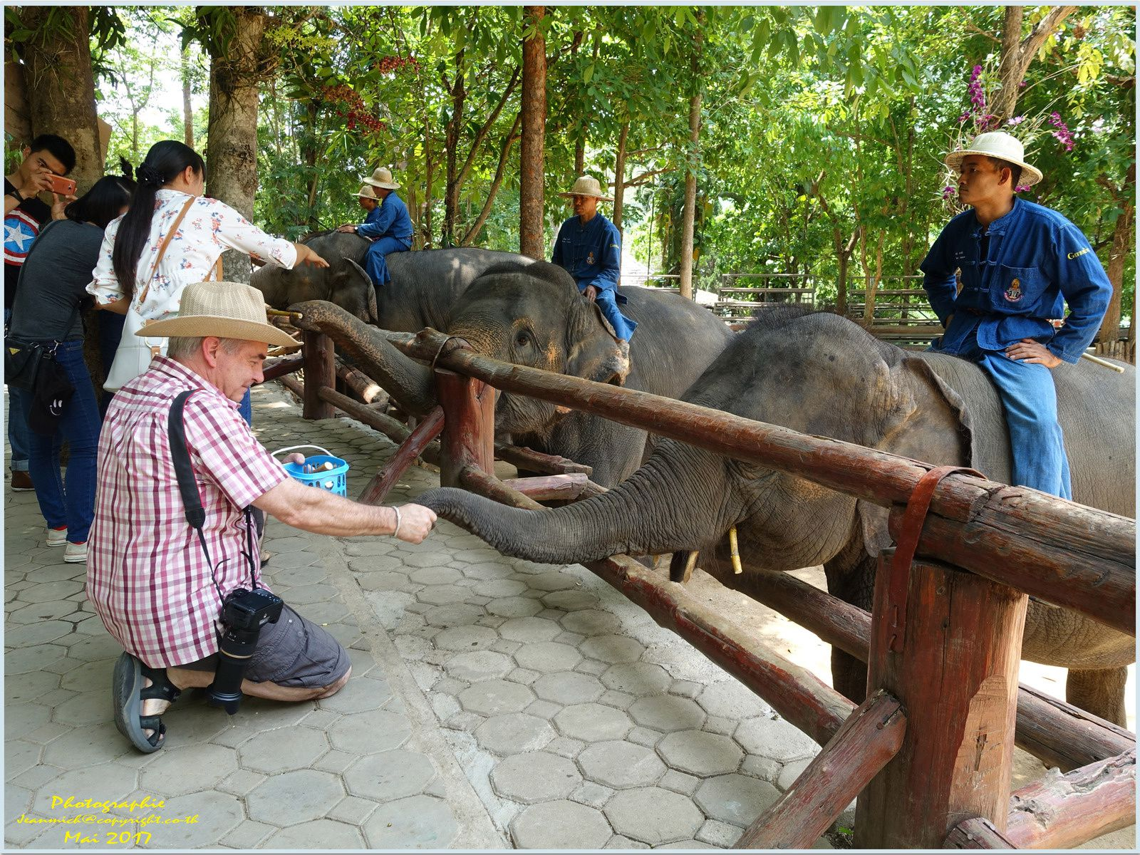 Hôpital des éléphants (Lampang)