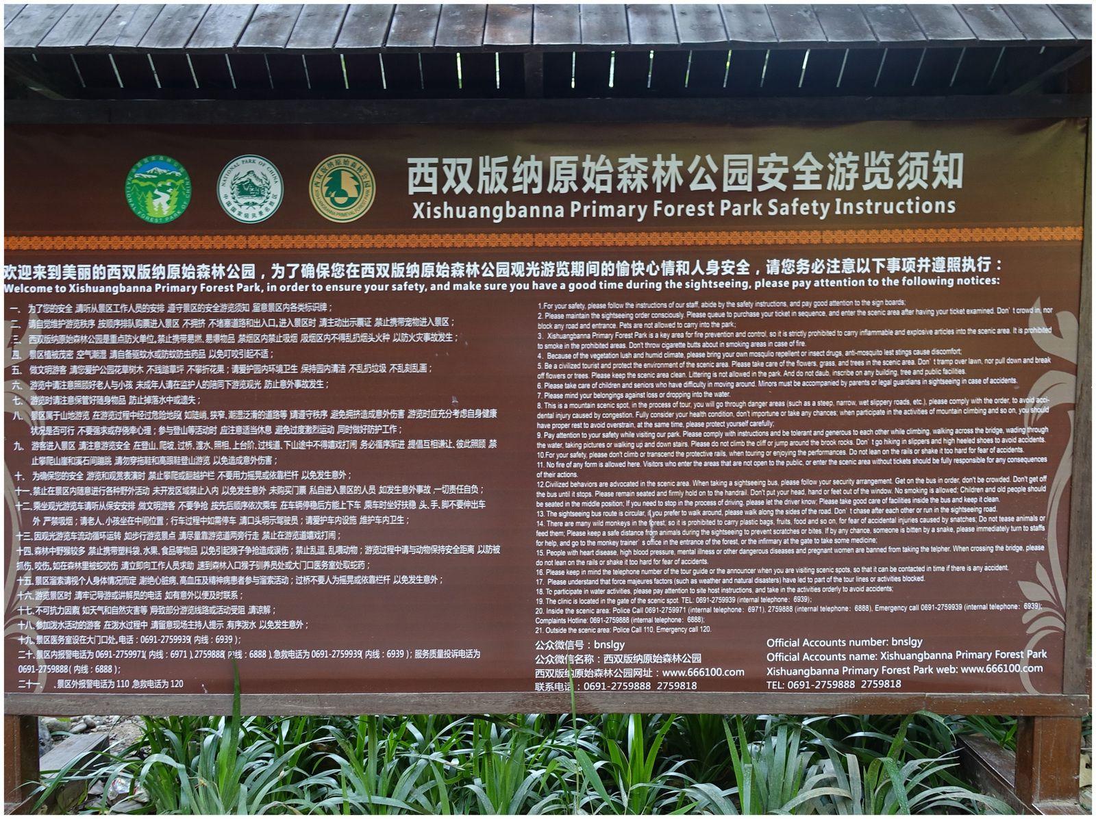 Spectacle de paons à Xishuangbanna (Yunnan Chine)