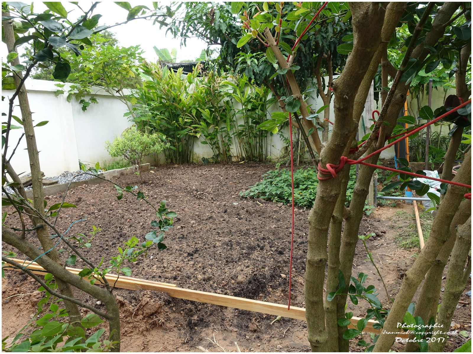 Les fleurs le jardin et la nature le blog de khon kaen for Blog jardin potager