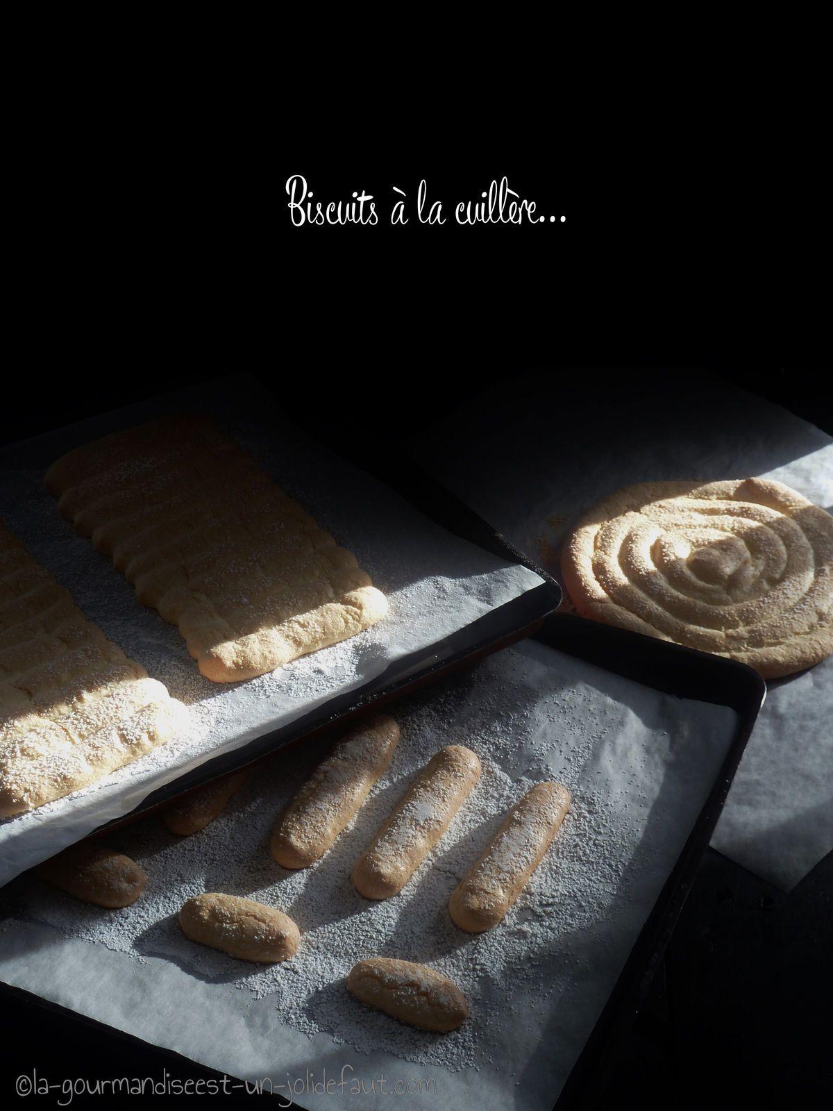 Biscuits à la cuillère pour les charlottes