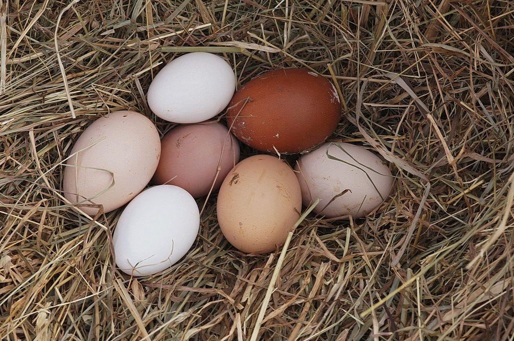 un nid de poule