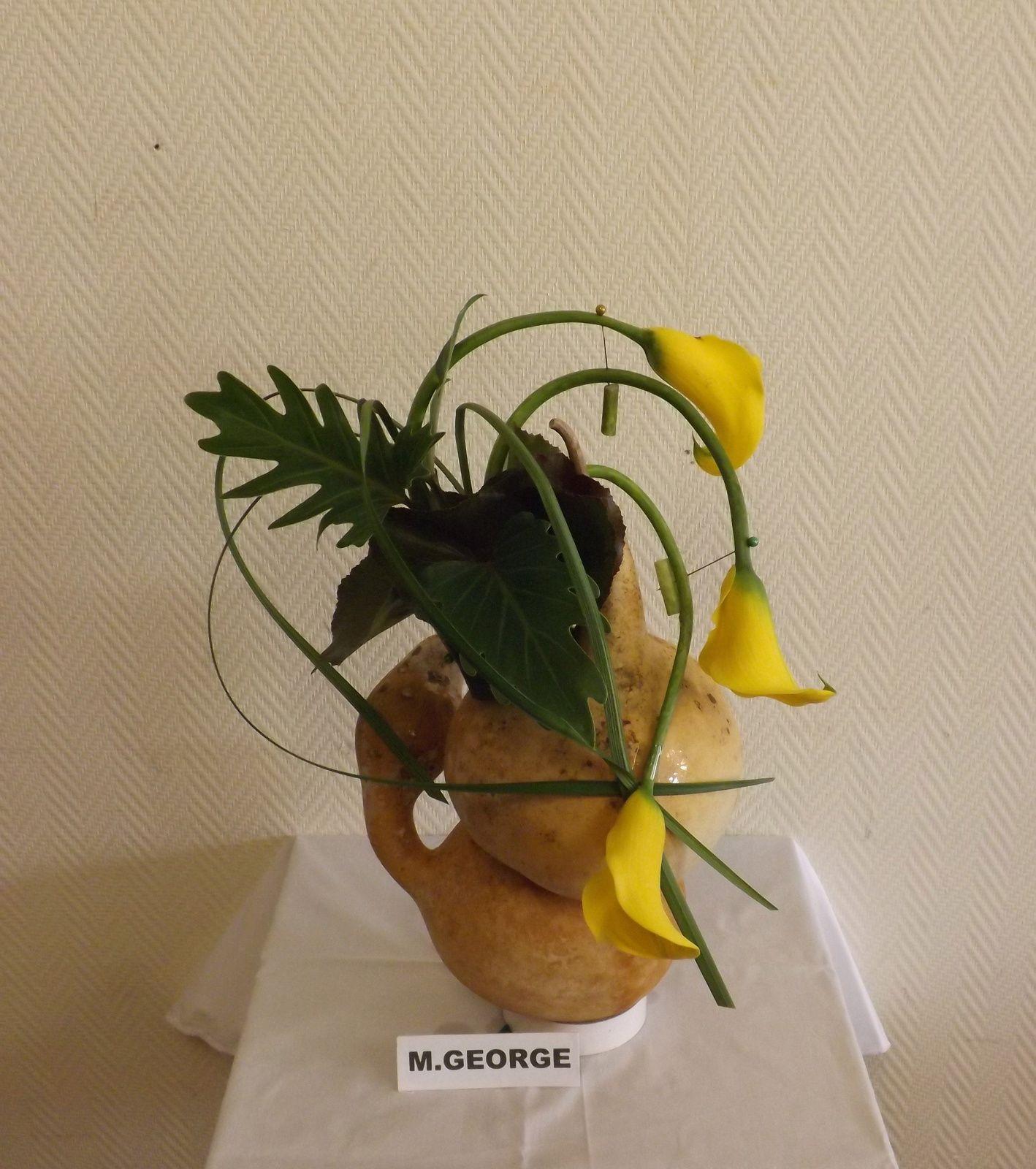 coucourdons, galax, xanadu, lily grass