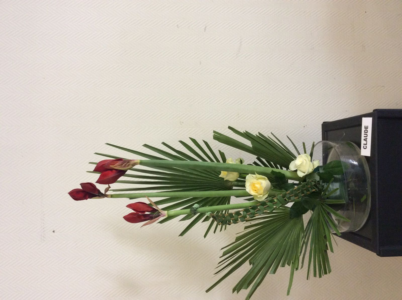 Amaryllis, Chamerops, Roses, Typa, Flexi grass, piments.