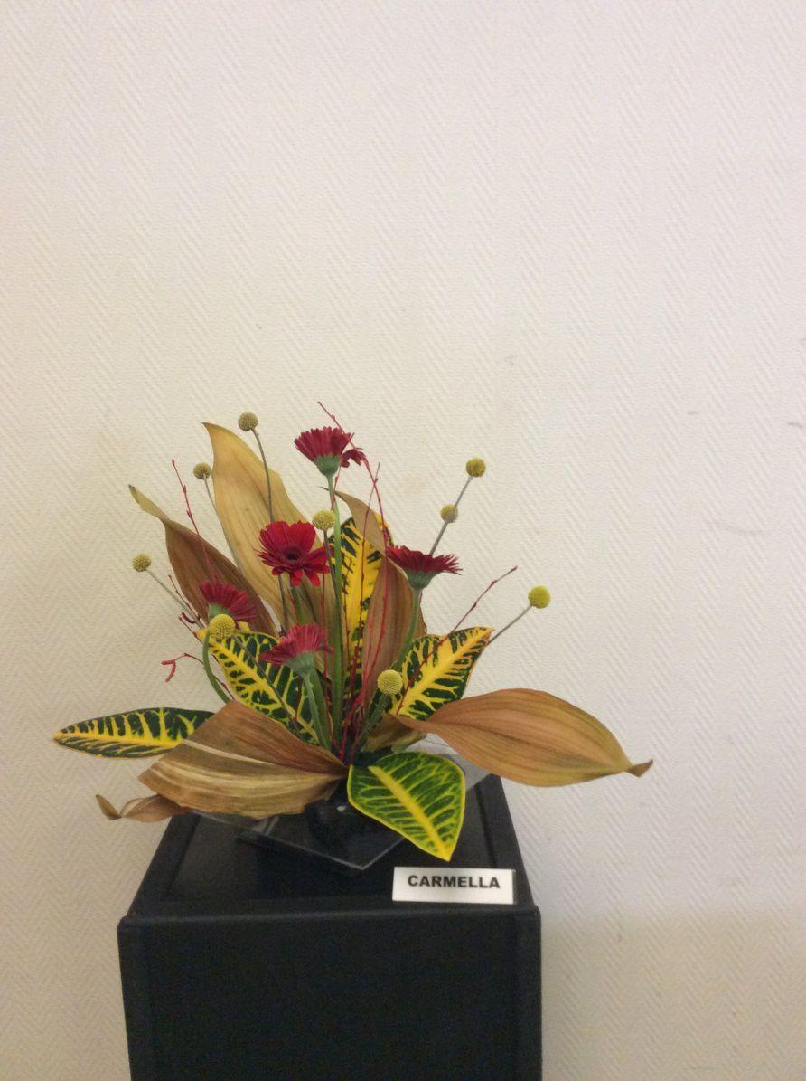 Feuilles d'aspidistra séchées, feuilles de Croton, germain, craspedia
