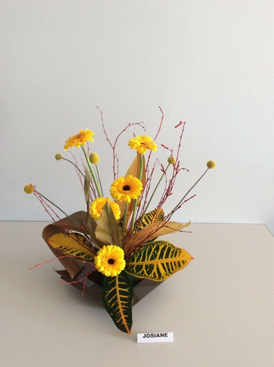 Croton, aspidistra séché, craspedia, germini.