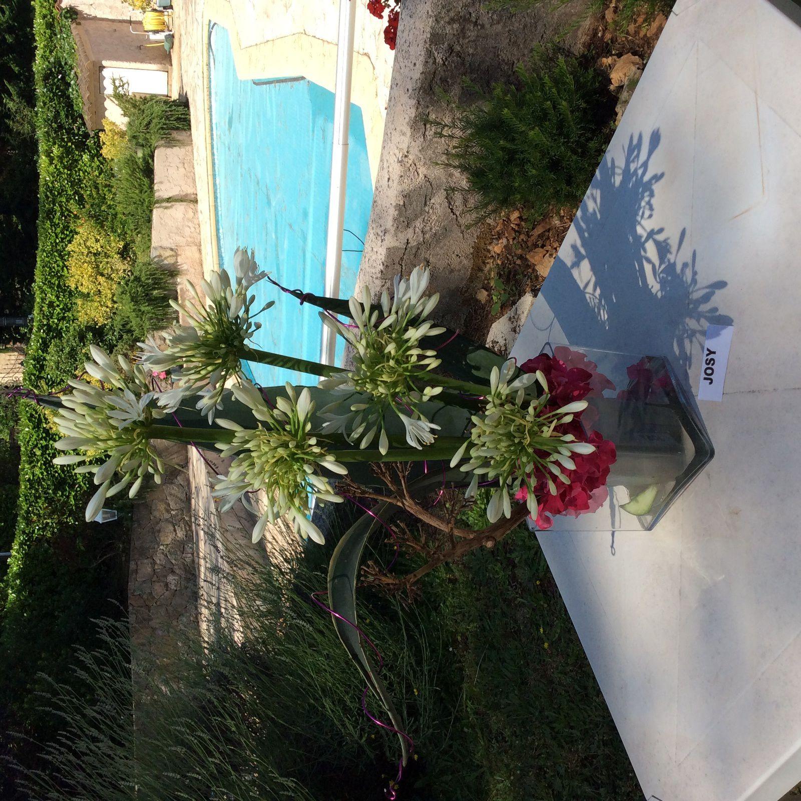 Agaves, Agapanthes, Fleurs d'agave sèche , Hortensia.