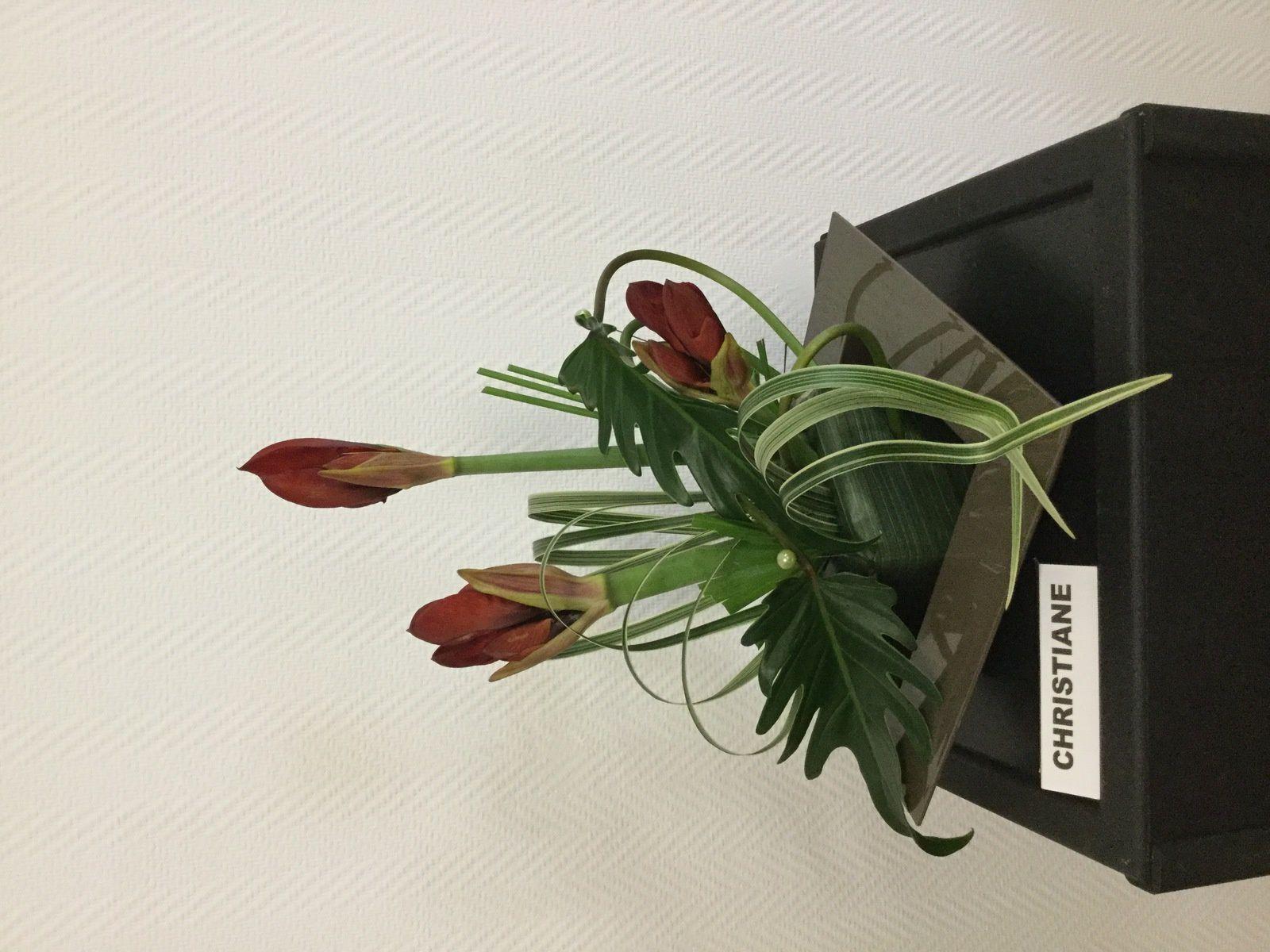 Amaryllis, tee-grass, flexi-grass, Xanadu, pandanus, chamerops, typha