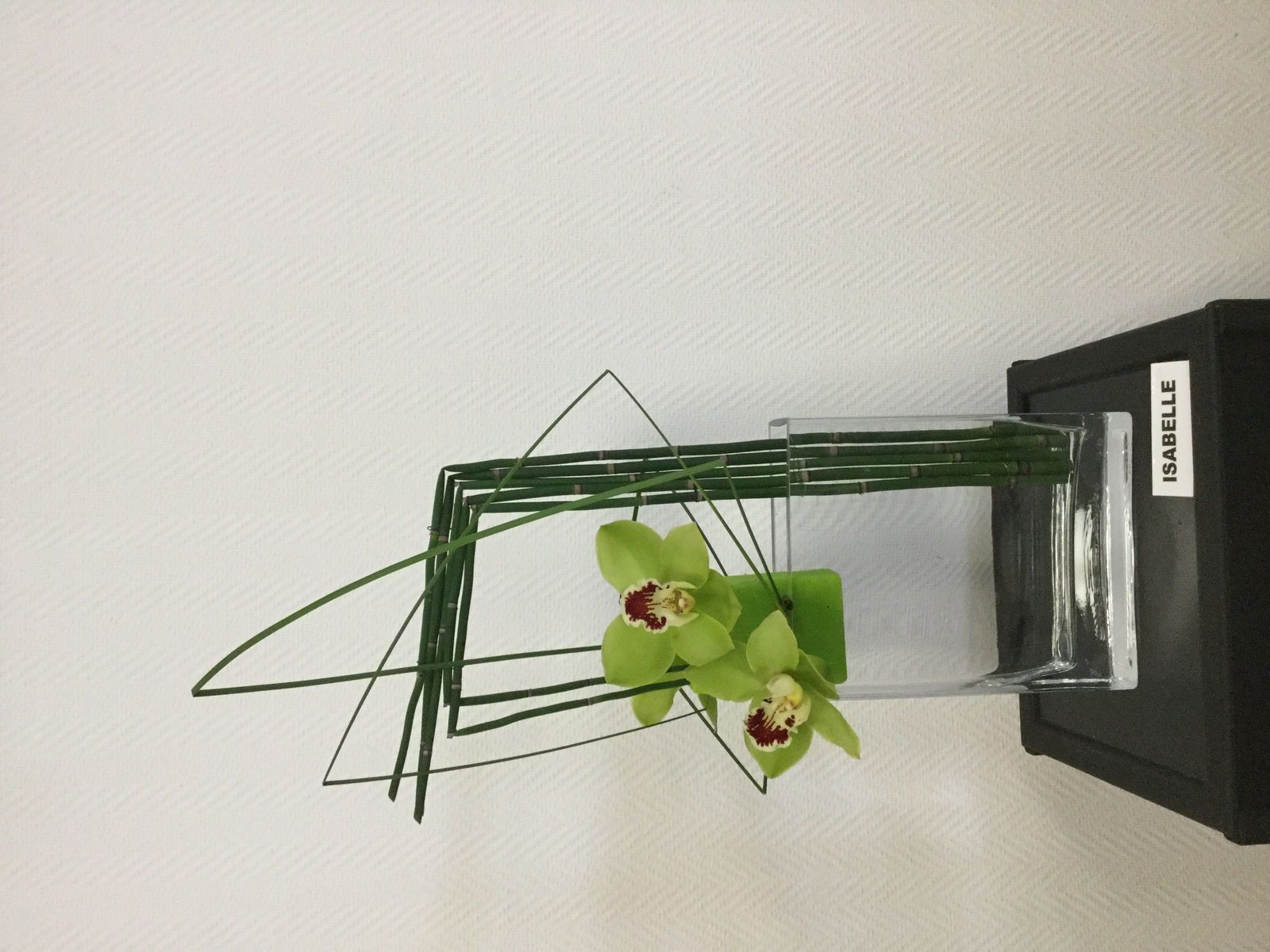 Prêles, Steel-grass, Galax, Cymbidium, mousse de couleur