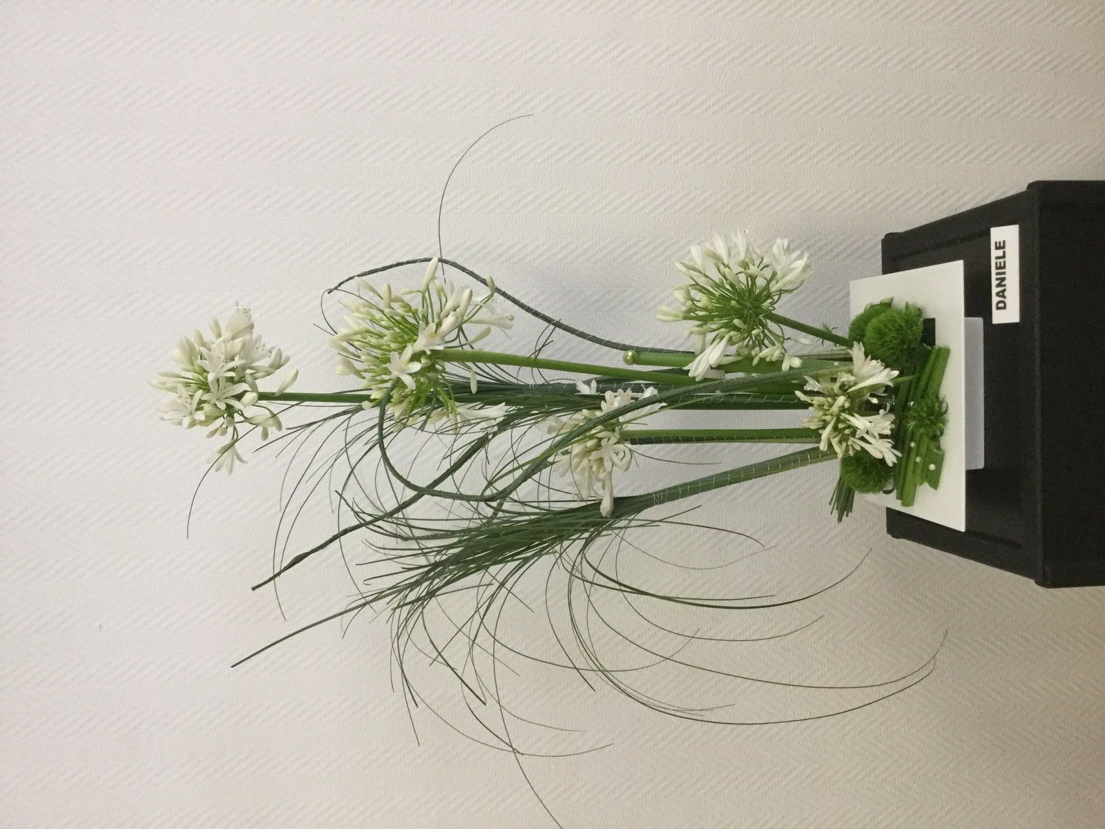 Agapantes, Bear-Grass, Oeillets Green Trick,