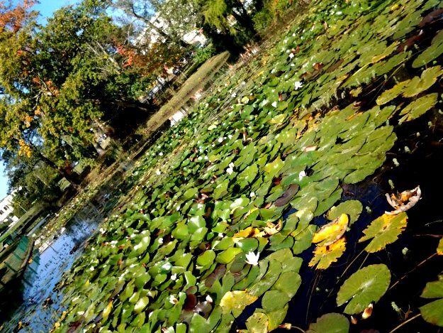 Je suis tombée sous le charme de ce joli coin de verdure, le petit pont, les nénuphars,  un endroit proche du college