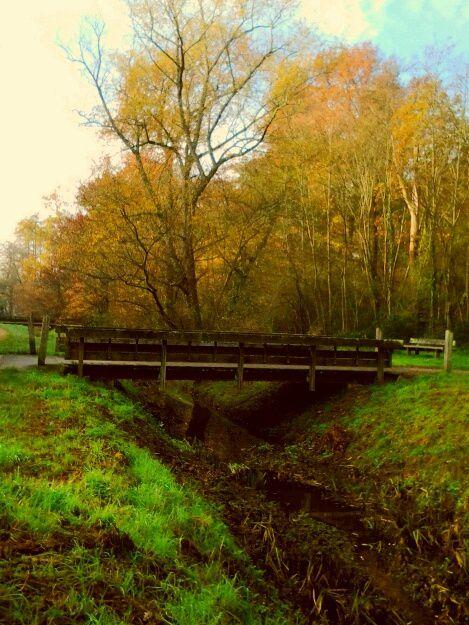 les ponts du Gué,  sur le Peugue, de Monbalon, du belvédère. ..une belle balade dans le parc du Bourgailh ce matin.