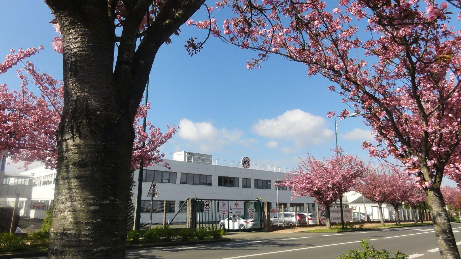 La Société ARO cachée derrière un rideau de fleurs de prunus !