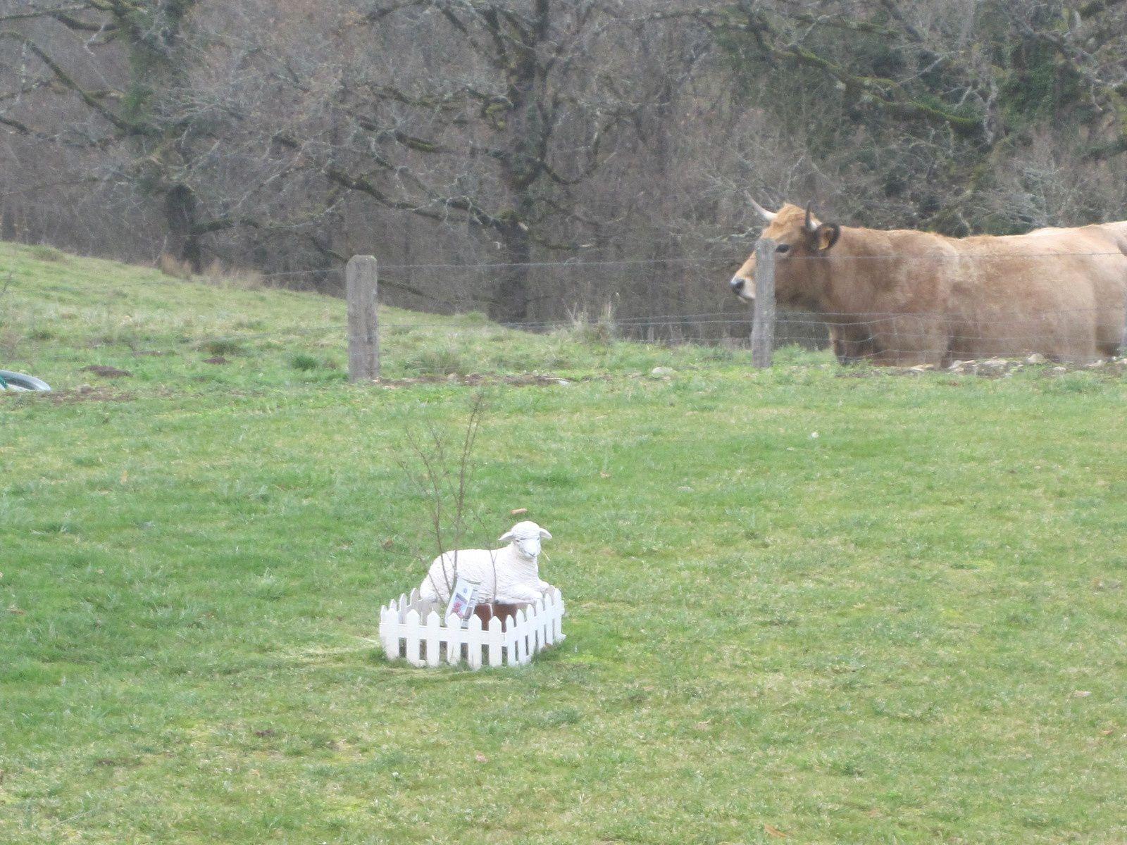 les insolites : un arbre torturé, un agneau statufié, un taureau très empressé, un avion oublié ........
