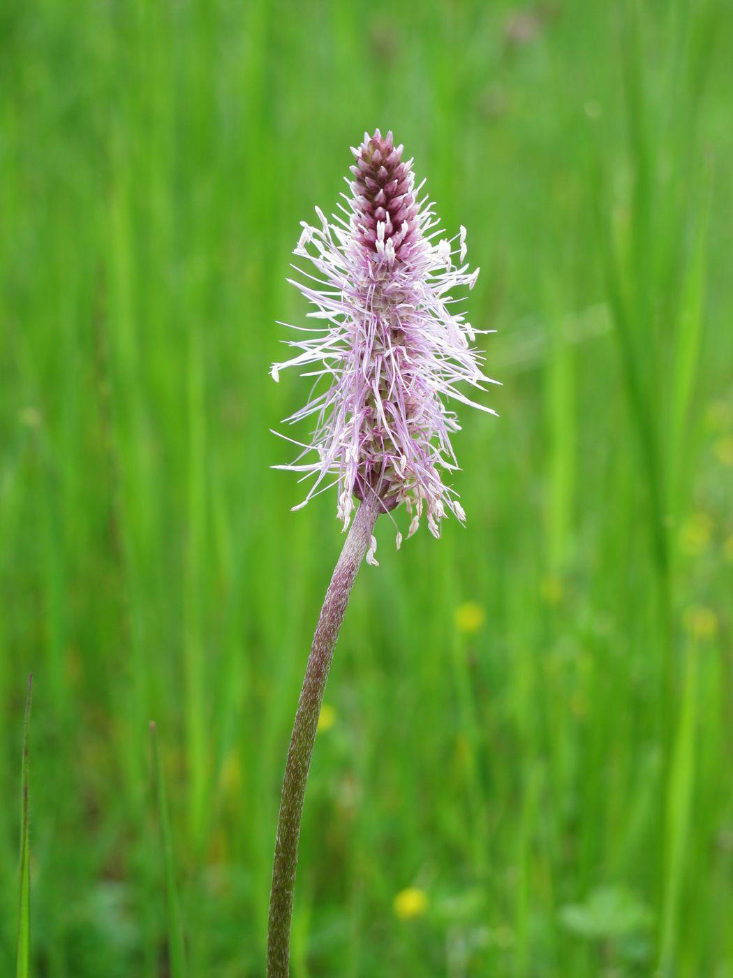 Campagnac, la flore