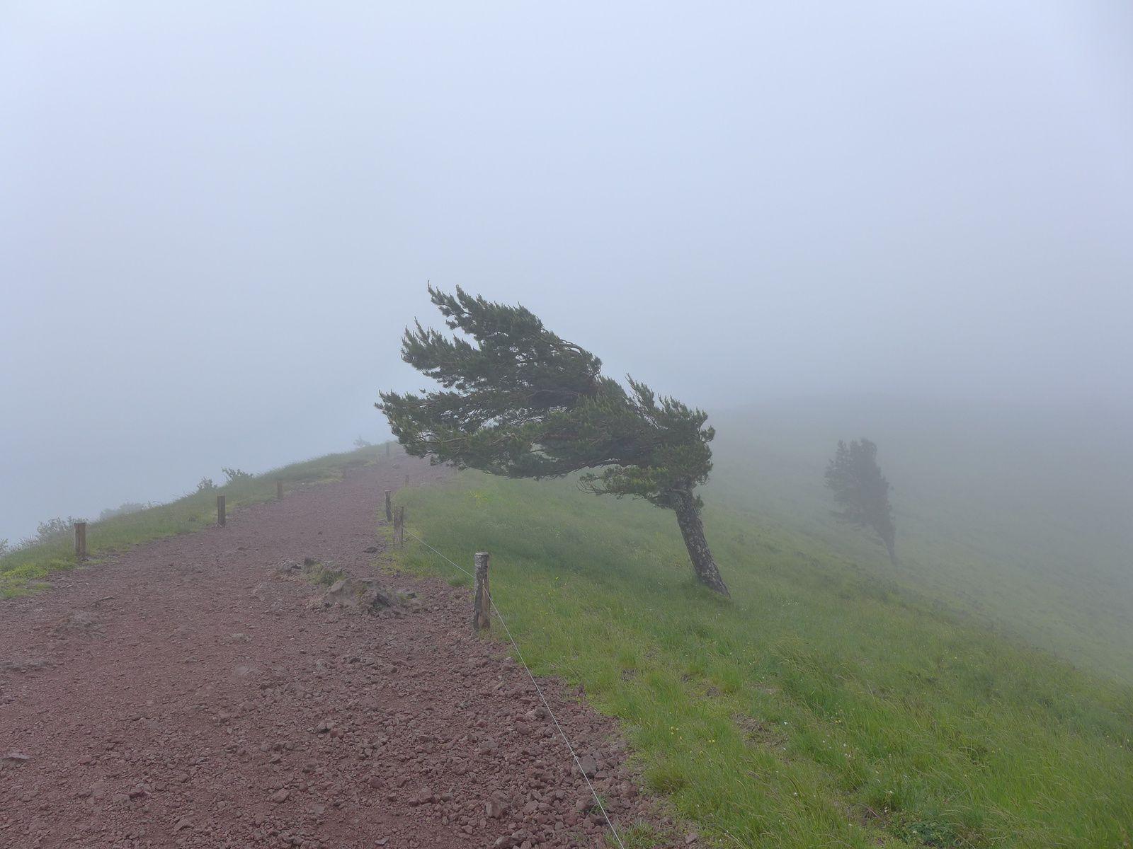 Il n'y avait pas que les arbres qui étaient dans le brouillard et la tourmente, les marcheurs du groupe 1 s'y trouvaient aussi ...