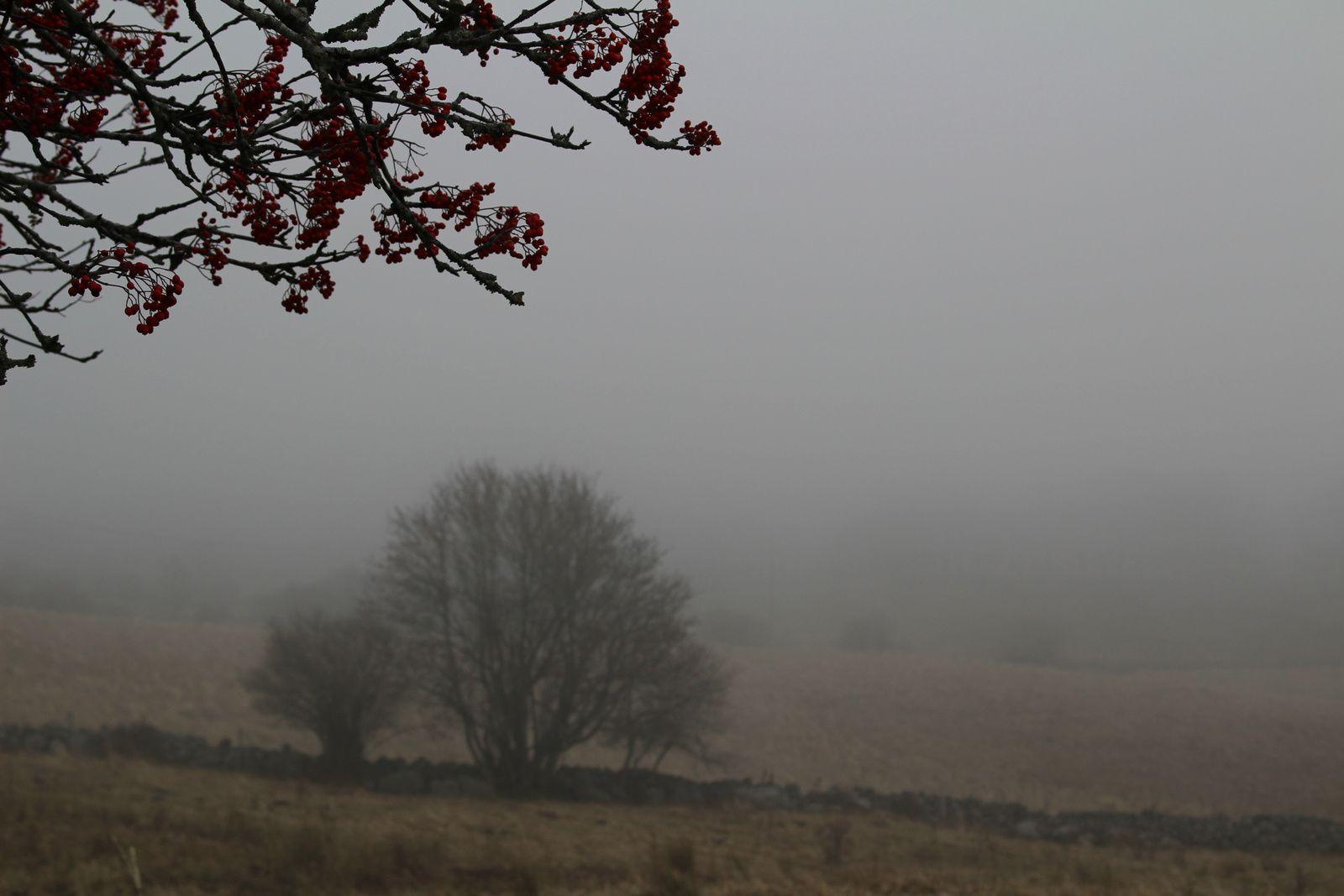 Couleurs d'automne sur l'Aubrac embrumé.