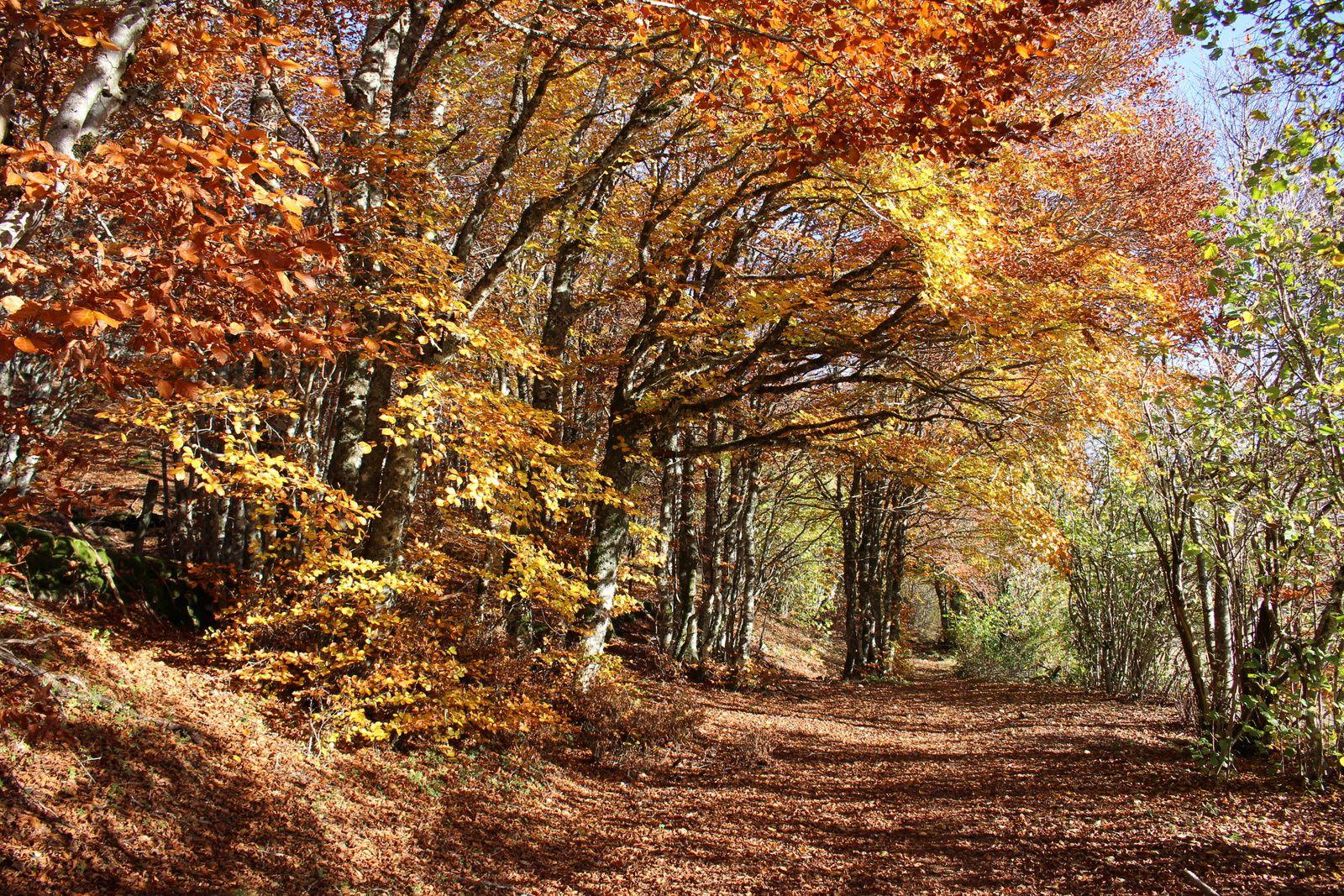 Couleurs d'automne sur l'Aubrac ensoleillé.