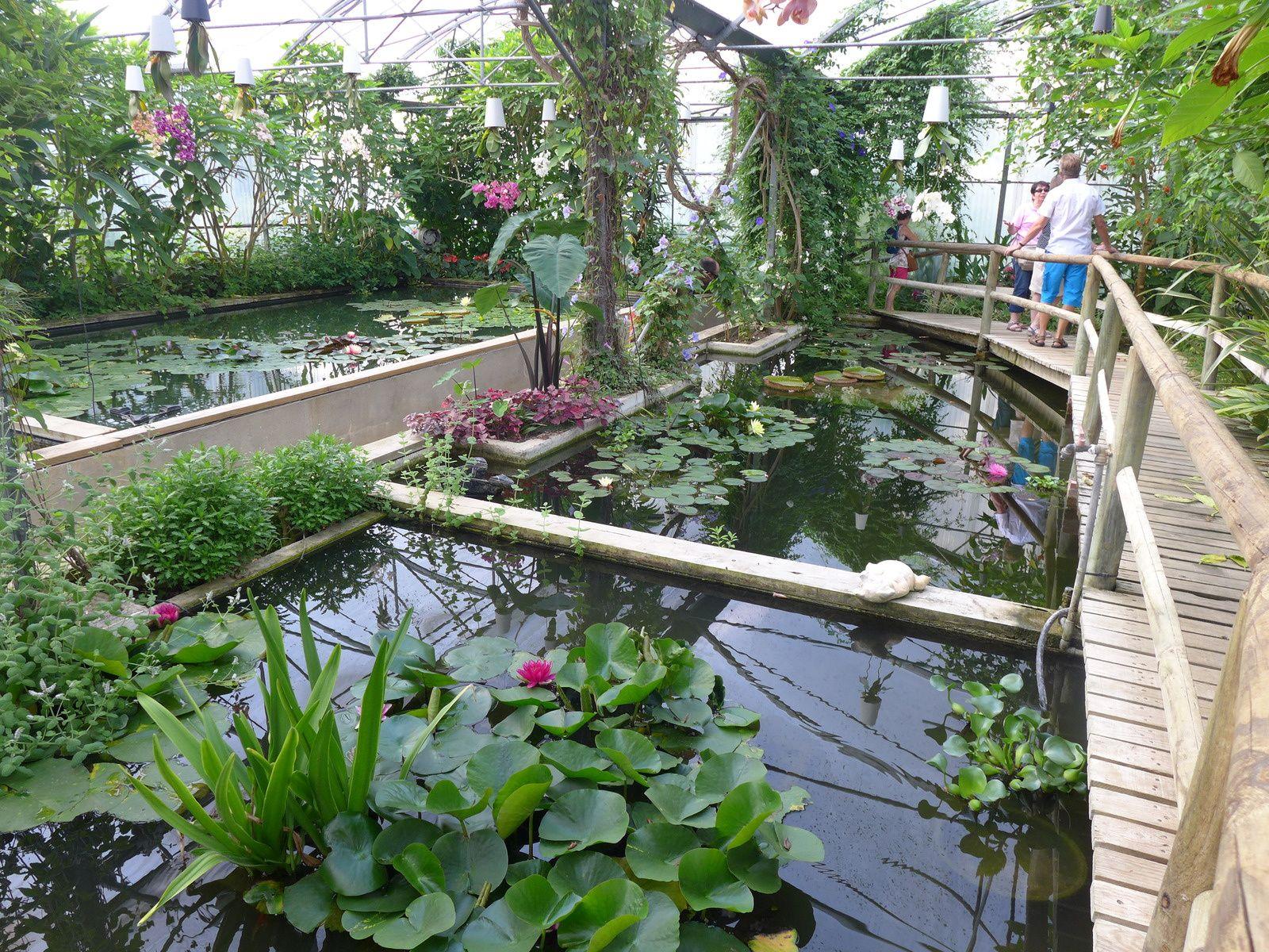 Des orchidées, une serre exotique aquatique, des fleurs de la passion.....