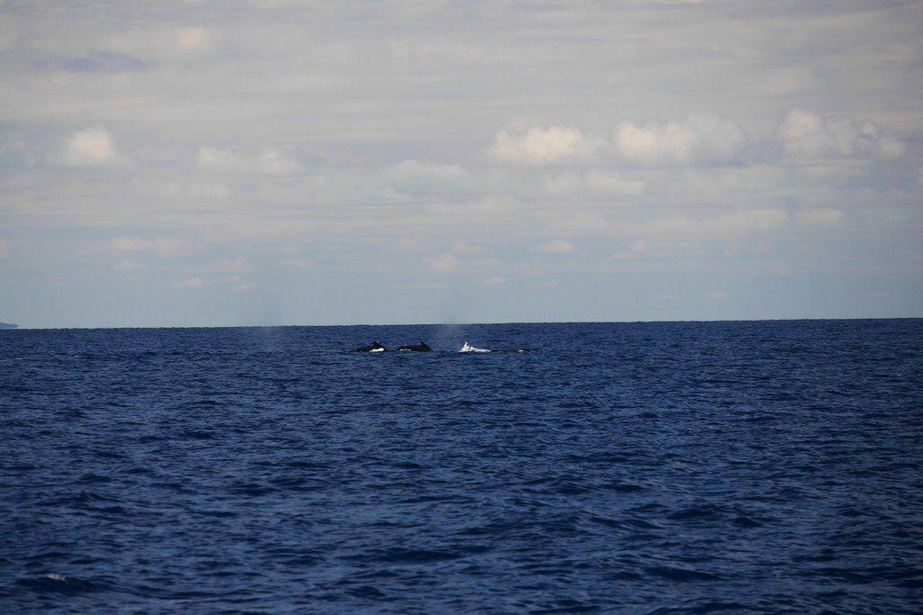 Course aux baleines....