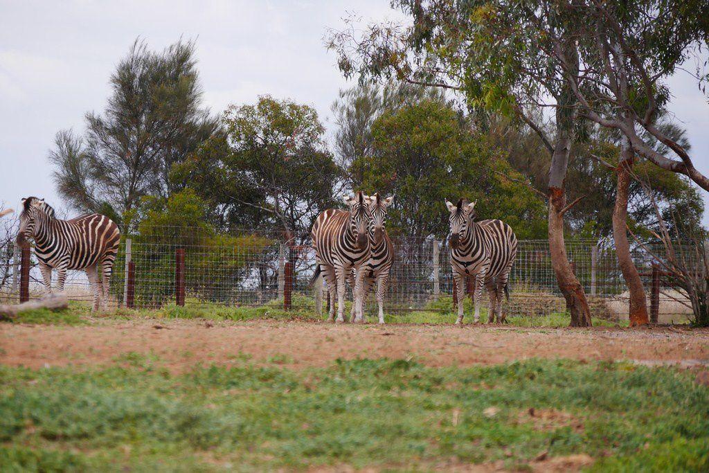 20161206 Werribee Safari Park
