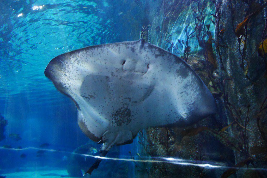 20161129 : Aquarium melbourne