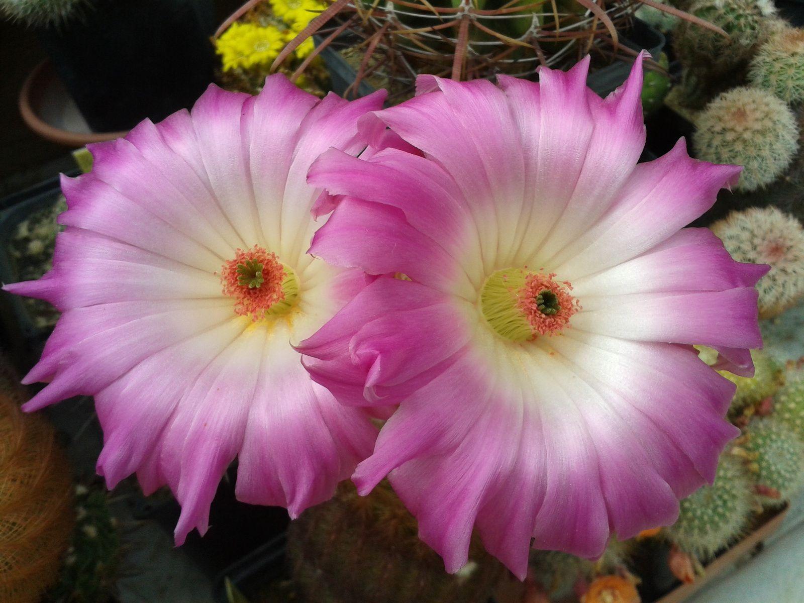 La collection végétale contribue à la préservation et à la dissémination des espèces végétales!...
