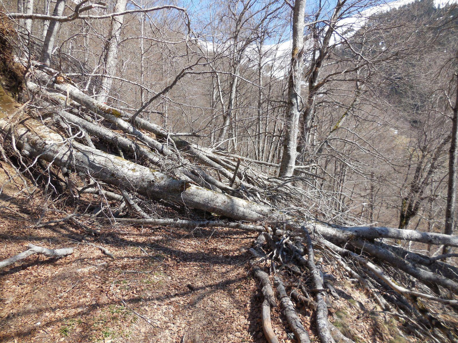 De nombreux arbres jonchent le sentier et nous font faire des exercices supplémentaires...