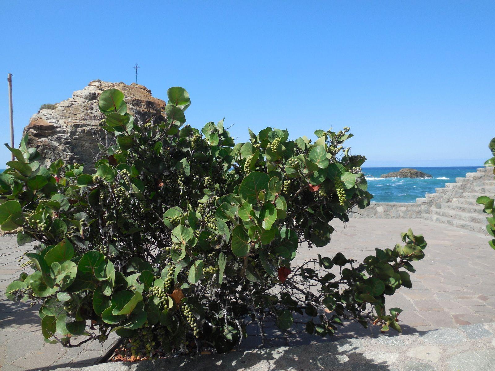 La Laguna et le Nord-Est de l'Île deTénérife