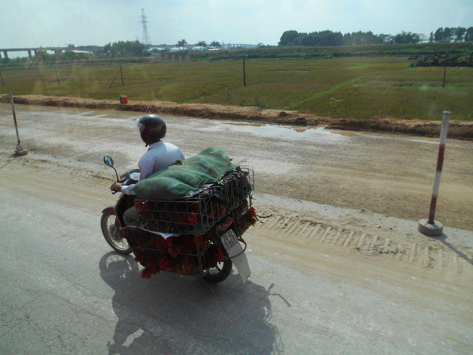 Transport de poulets...