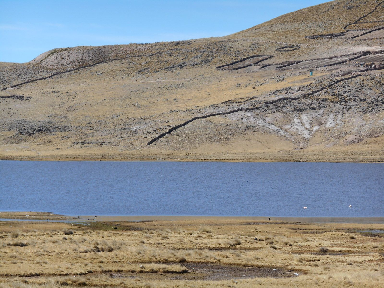 Puis arrivée aux lagunas Lagunillas et Saracocha...