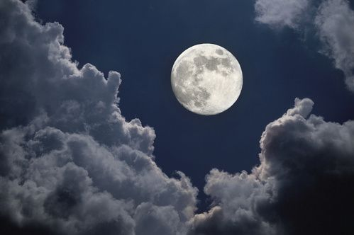 au jardin en mars...avec la lune.