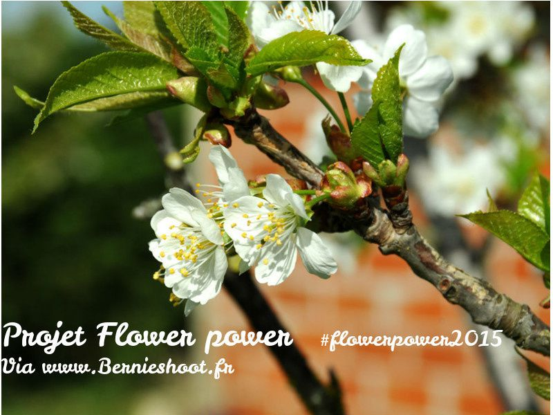 Le pouvoir des fleurs du lundi. 3