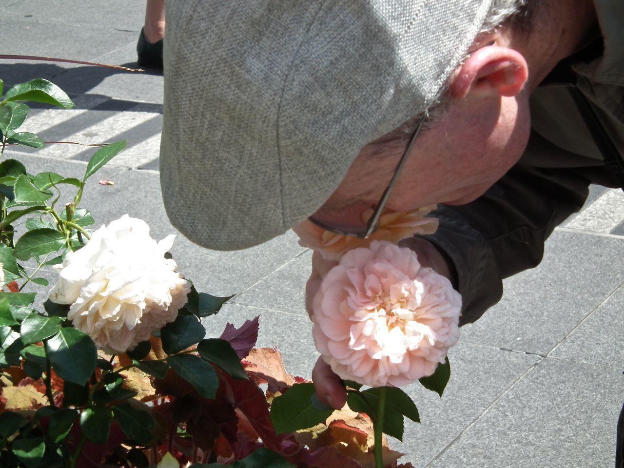Des pas avec les roses! 3