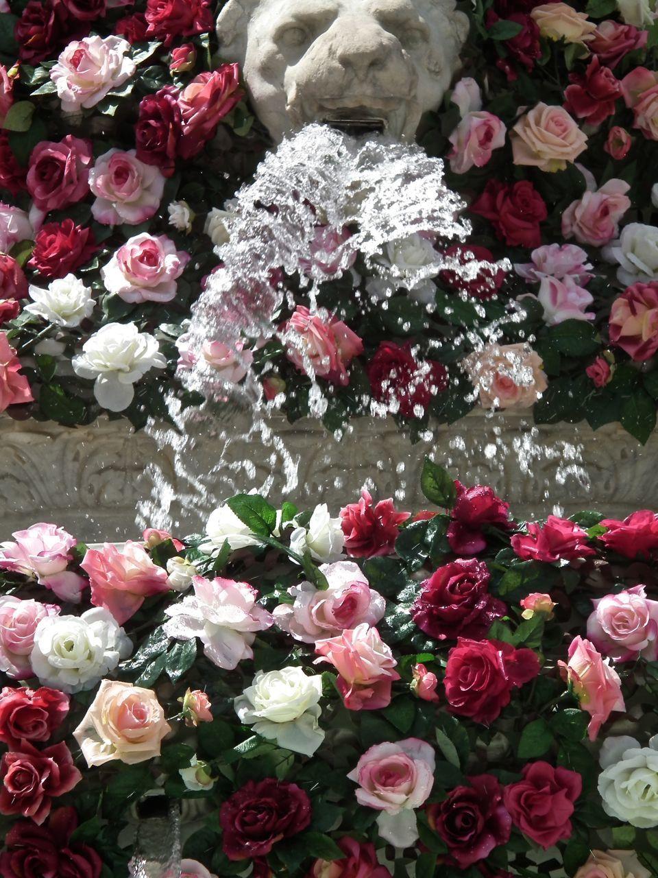 Des pas avec les roses! 2