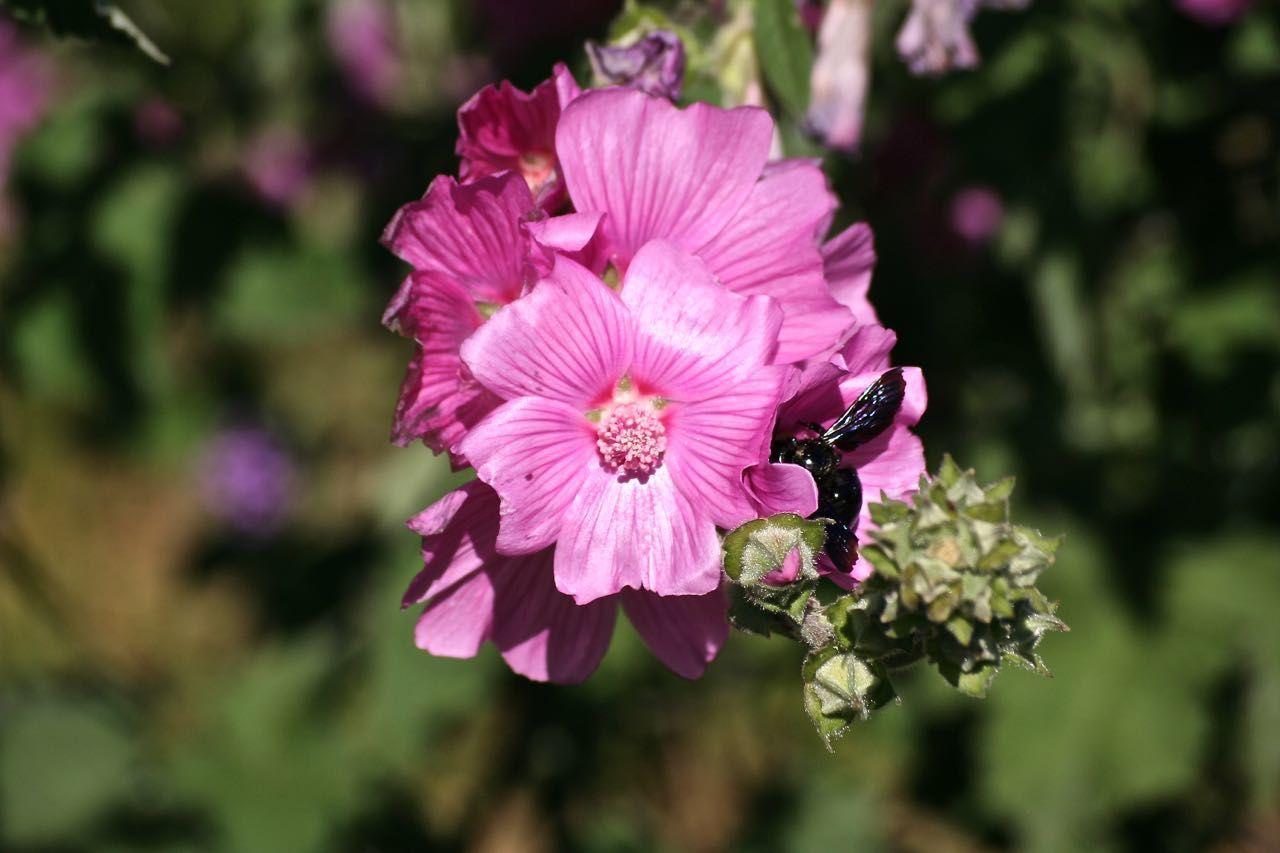 Faune et flore-2