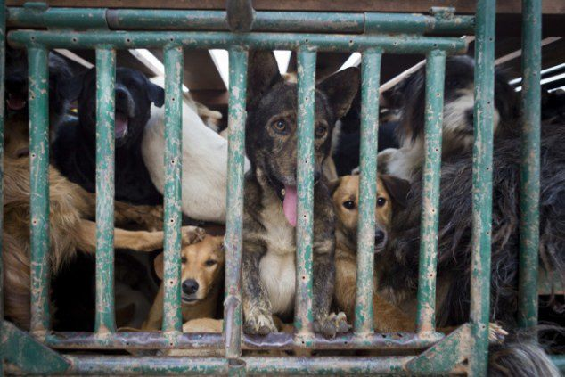 La Chine produit du cuir de chien