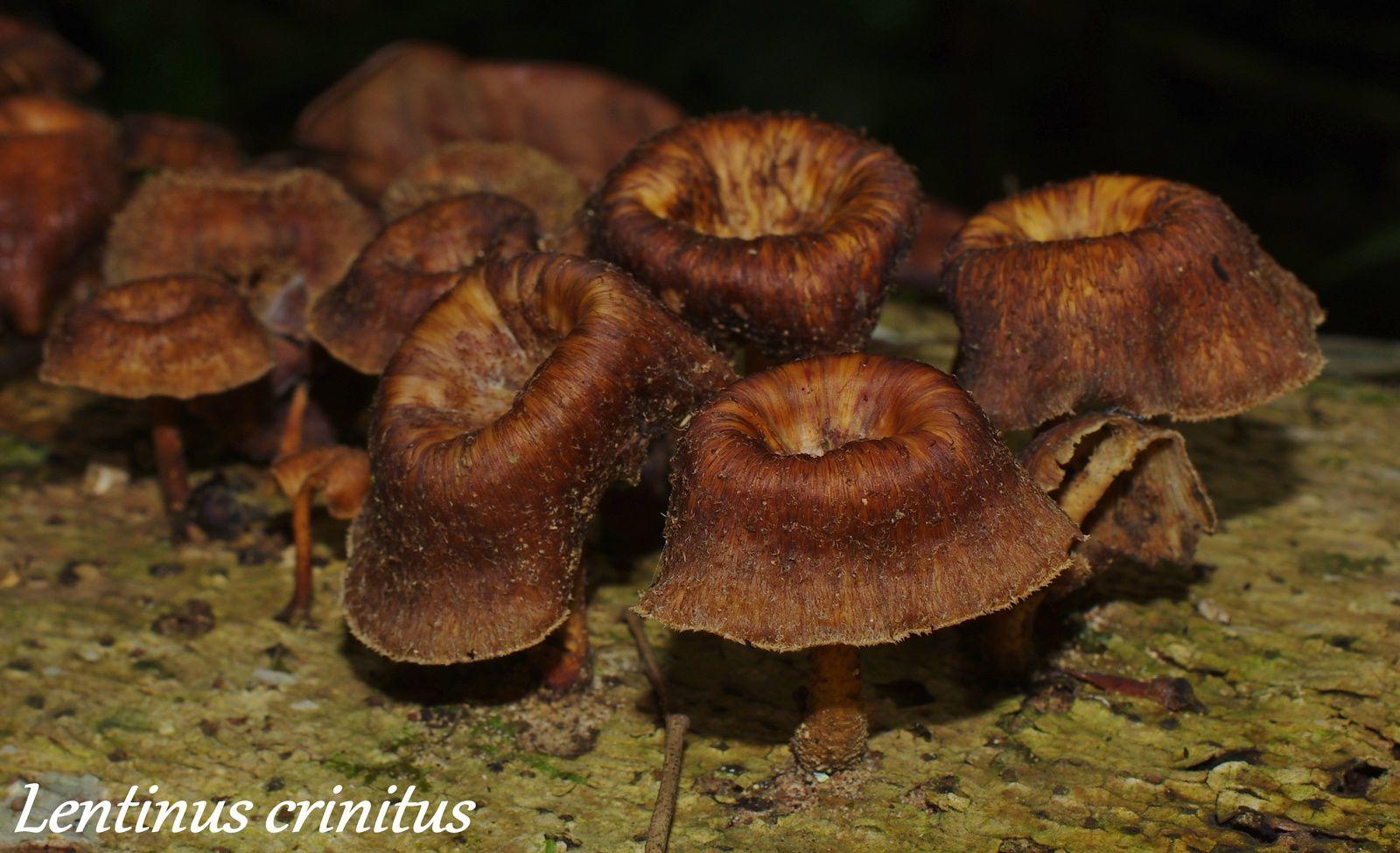 Album - champignons