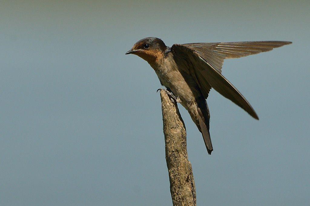 Sortie ornithologique