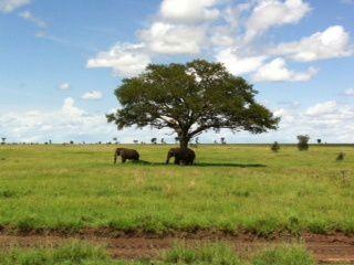 Magnifique Tanzanie