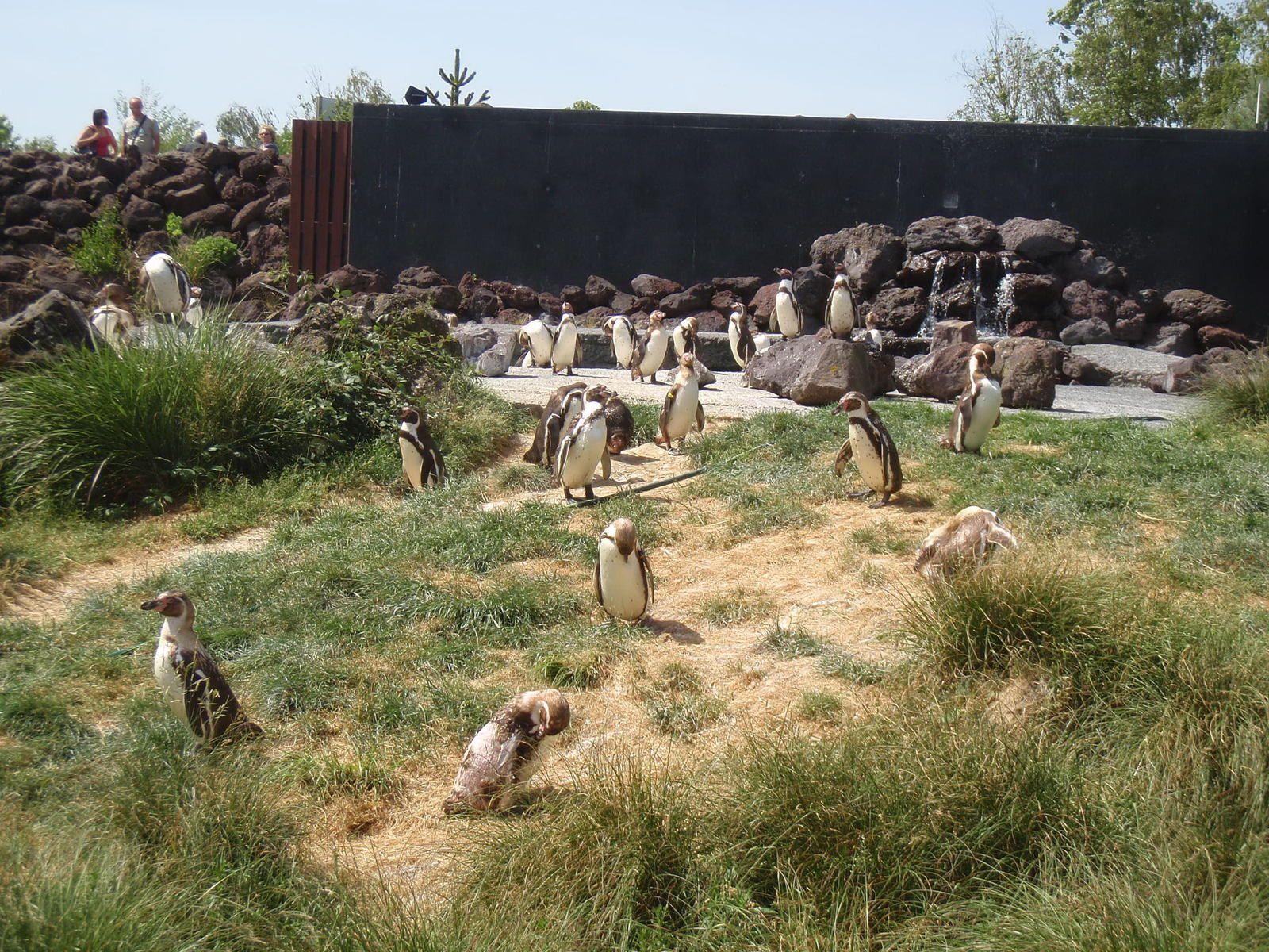 Parc des Oiseaux: Villard les Dombes