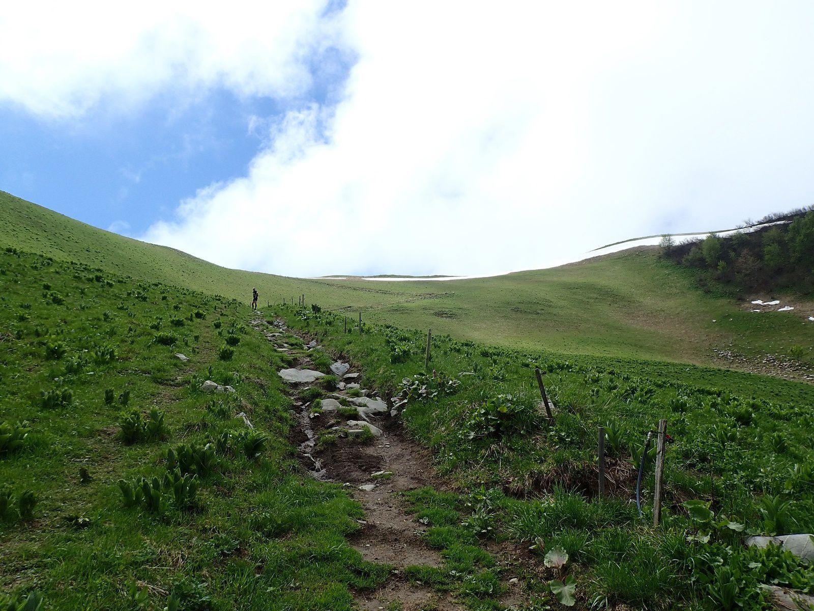 Montagne de Sulens: Boucle le Mont>>>Plans Bois