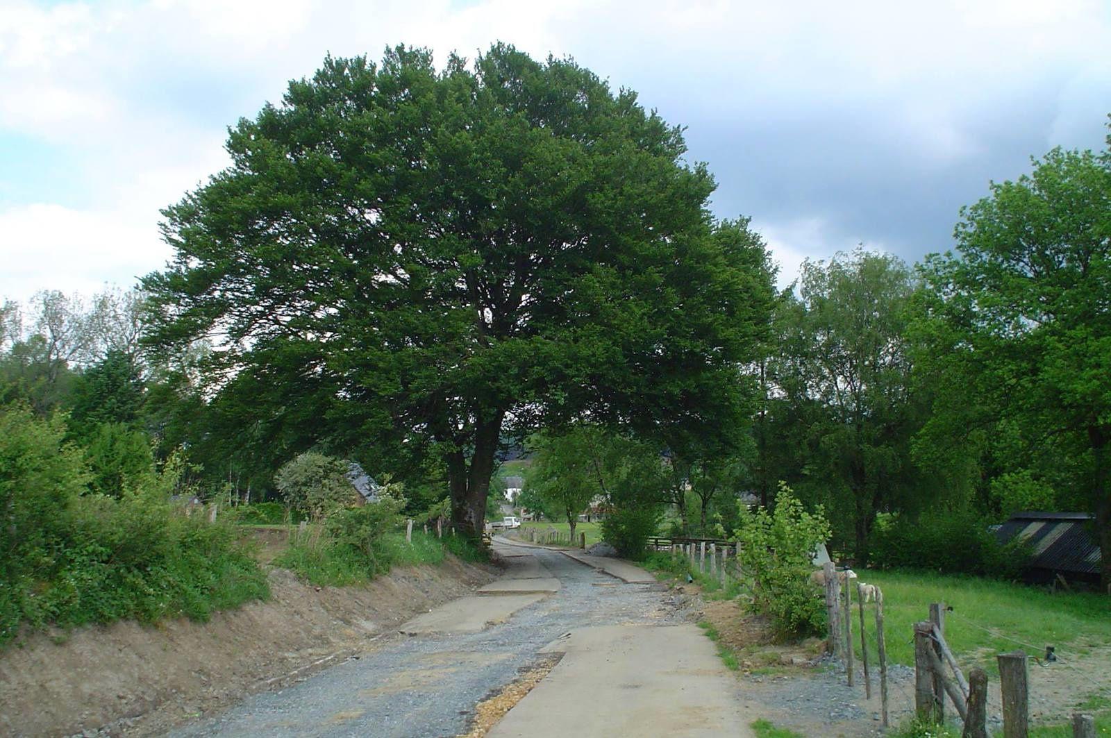 Voici l'arbre qui vient de disparaître