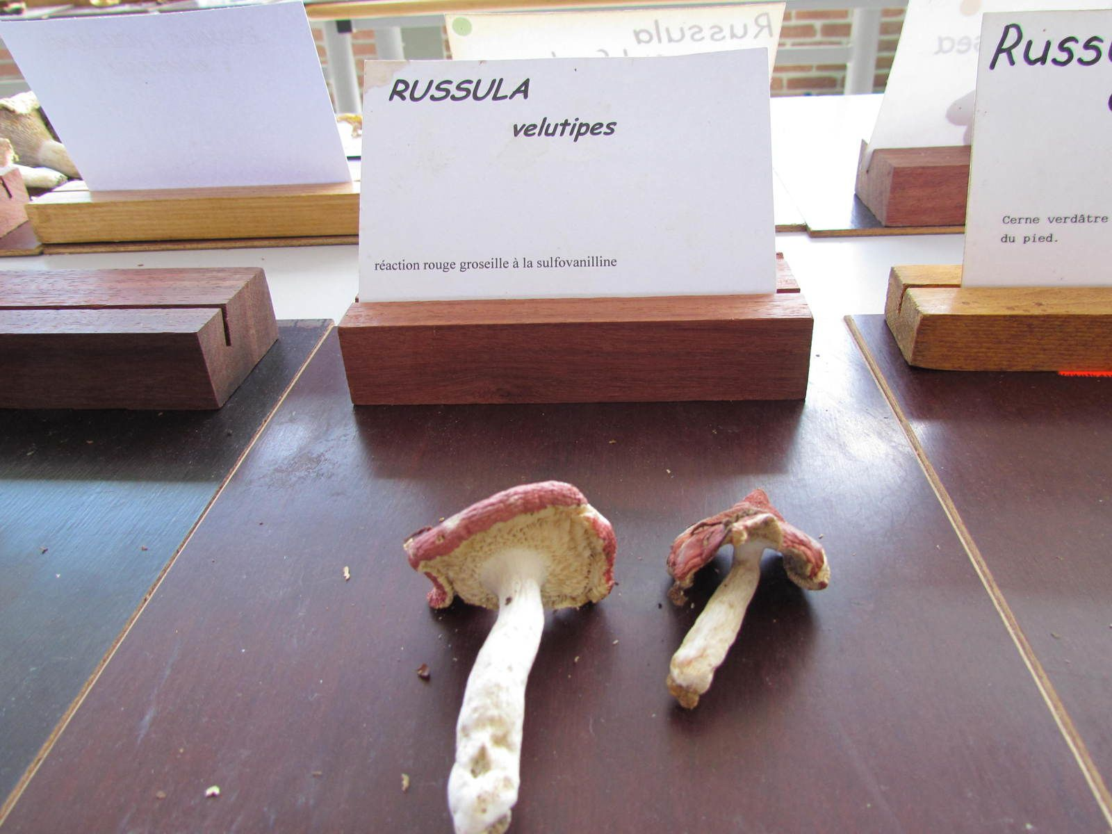 Stage de mycologie